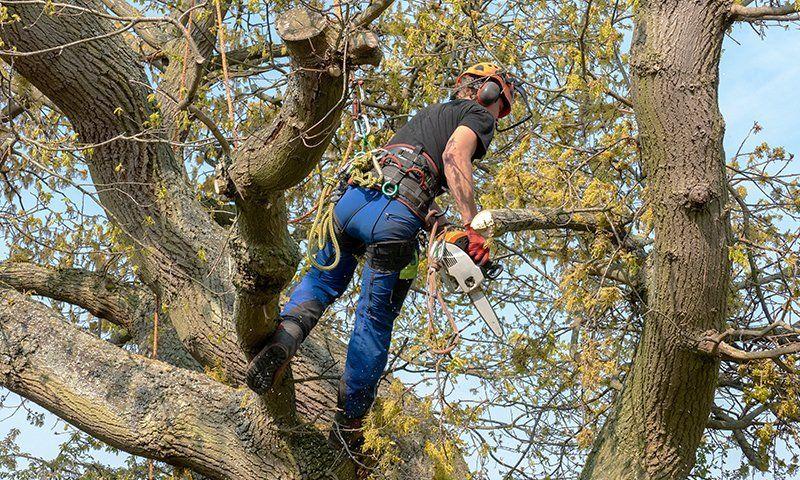 Scegliere la corda adatta al tree climbing
