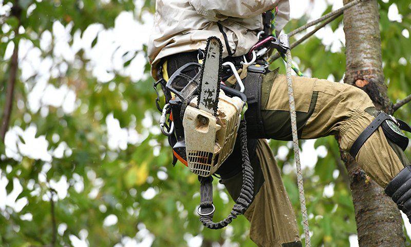 Attrezzatura tree climbing: tipologie di corde
