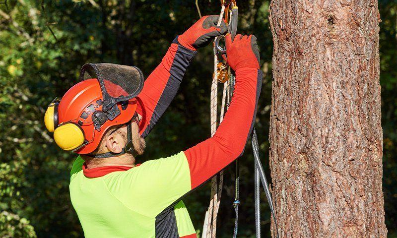 I nodi per il tree climbing