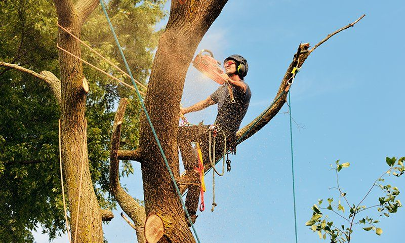 Tree climbing in sicurezza